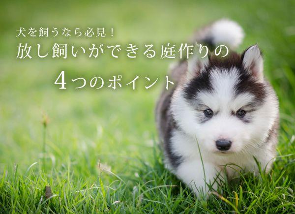 犬を飼うなら必見!放し飼いができる庭作りの4つのポイント