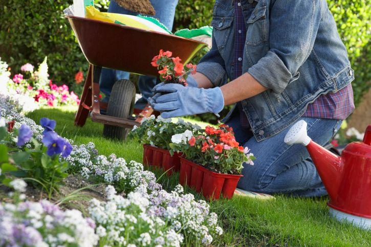 花や木は好きだけど手入れが大変…そんな面倒屋さんでも大丈夫、お手軽ガーデニング82635753