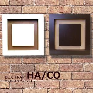 P1JGJG-HACO-_1